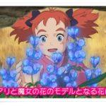 メアリと魔女の花の魔力がある花の名前は?モデルとなる花を考察!1