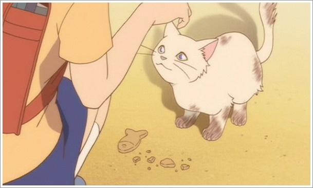 猫の恩返しのユキちゃんの種類と正体は?事故で死んでるって本当?4