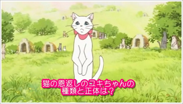猫の恩返しのユキちゃんの種類と正体は?事故で死んでるって本当?2