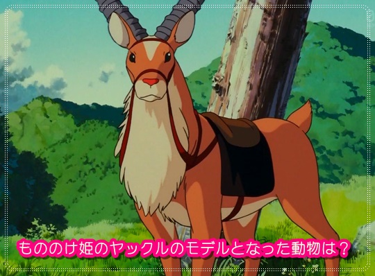 もののけ姫のヤックルのモデルとなる動物は?島になぜ乗らなかった?2
