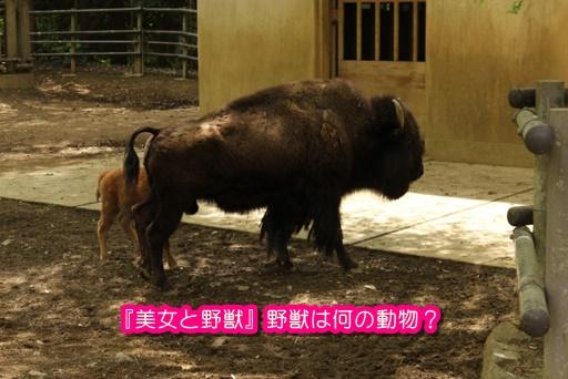 [美女と野獣]野獣は何の動物?モデルは何?ツノの向きが実写と違う?2